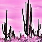 Wild Cactus by Judi FitzPatrick