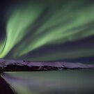 green wings by JorunnSjofn Gudlaugsdottir