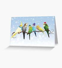 Winter Parakeets & Cockatiels Greeting Card