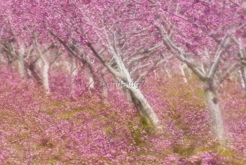 Orchard Madrigal by sundawg7