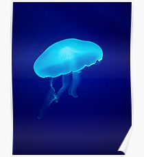 Glowing Blue Jellyfish Poster