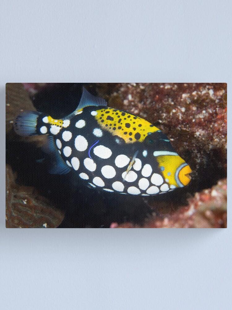 Alternate view of Clown triggerfish Canvas Print