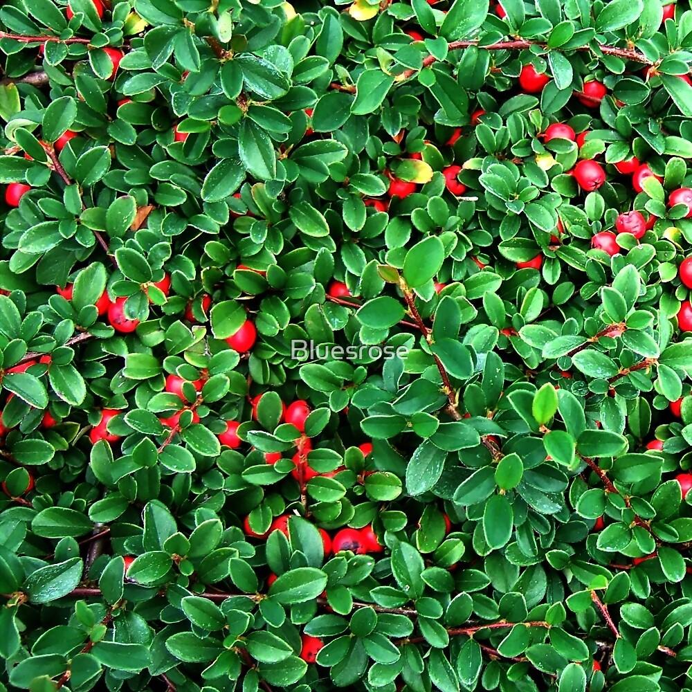 Berry time by Bluesrose