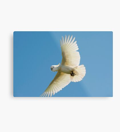 High Flyer - white cockatoo Metal Print