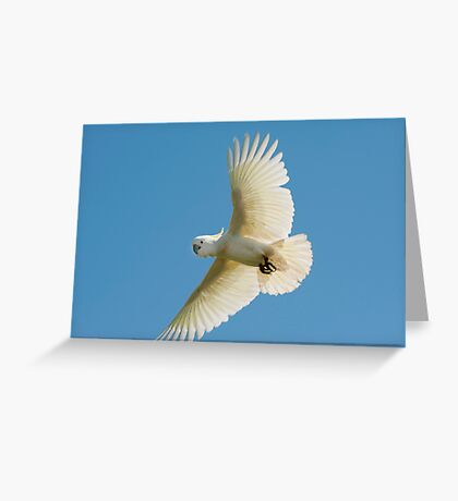 High Flyer - white cockatoo Greeting Card