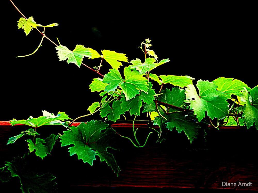 Grape Vine by Diane Arndt