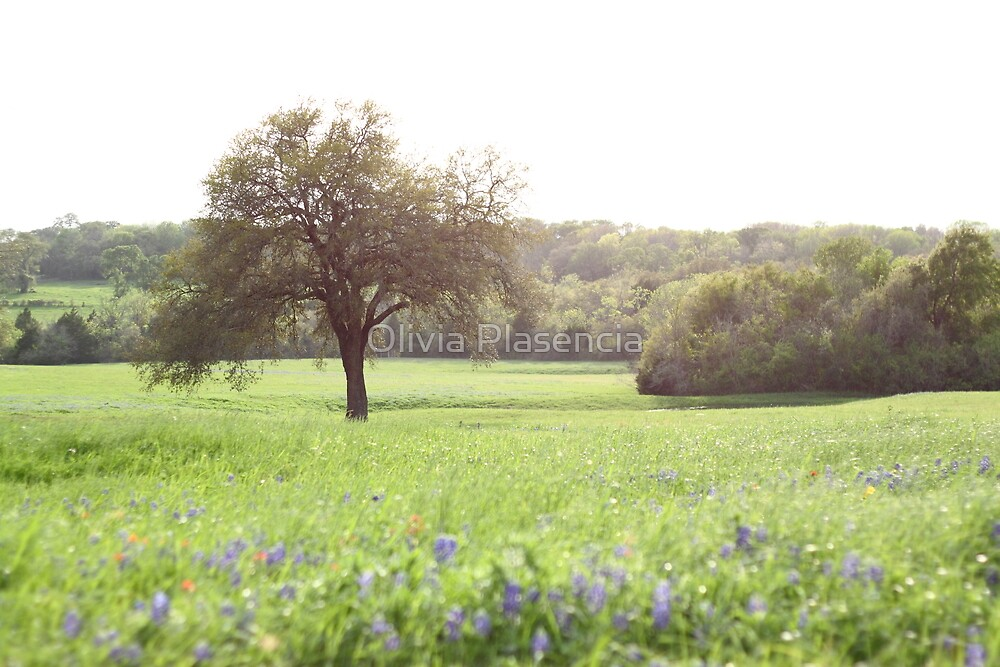 Texas with Bluebonnets by Olivia Plasencia