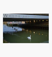 Clever Swans Photographic Print