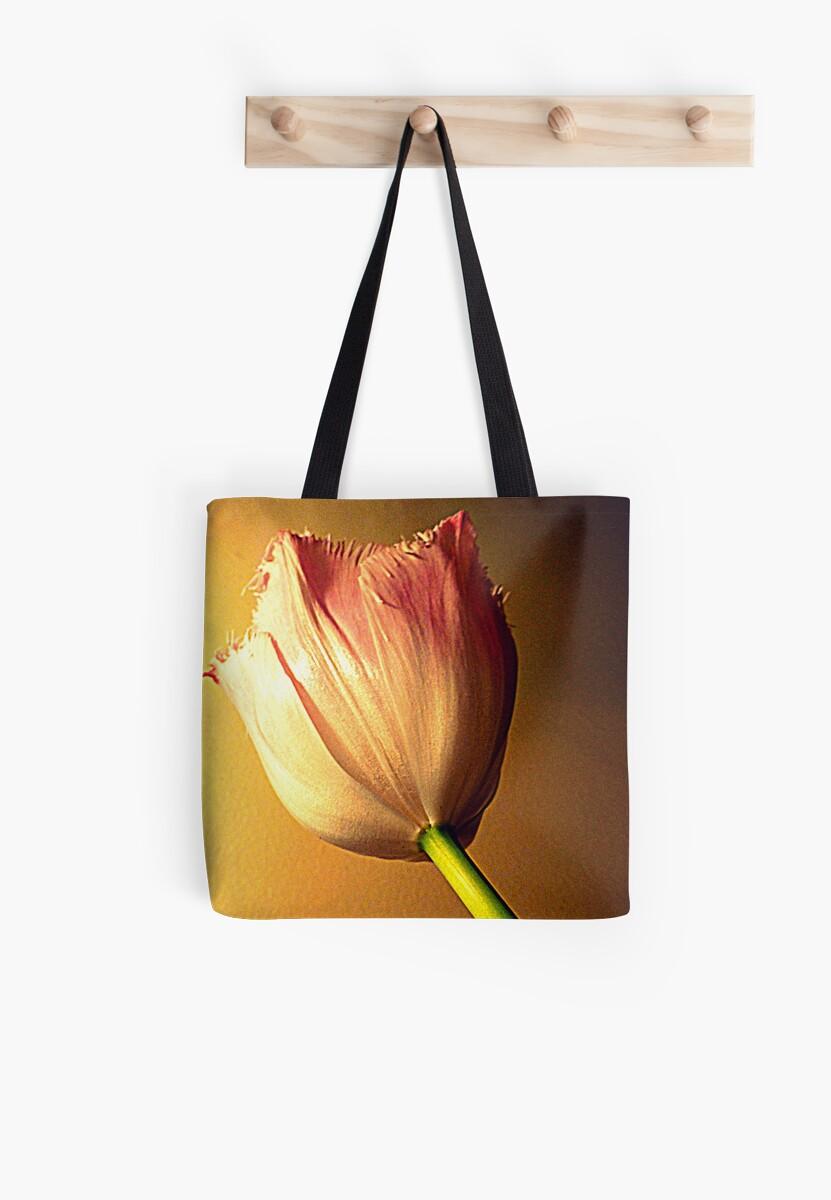 Late Spring Tulip by Fara