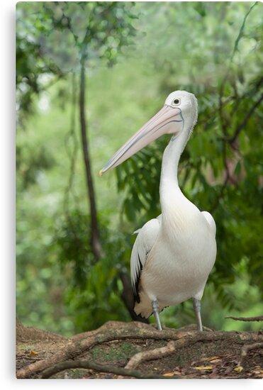 A wonderful bird is the Pelican.... by Jenny Dean