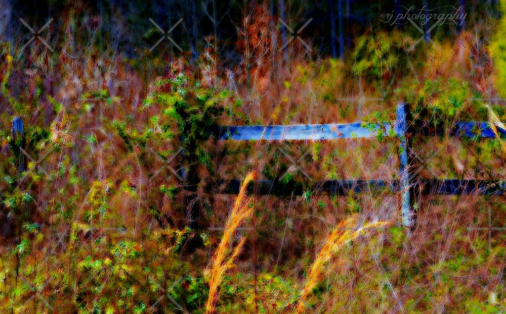 The Other Side of the Fence by Scott Mitchell