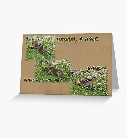 Curious Chipmunk Gets A Surprise Greeting Card