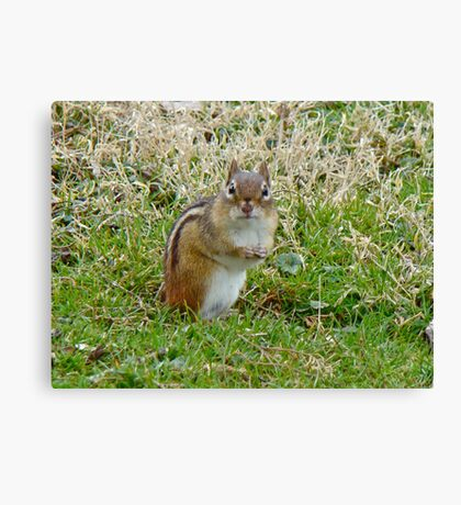 Irresistible Chipmunk Eyes Canvas Print