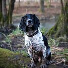 Muddy Paws by Mark Cooper