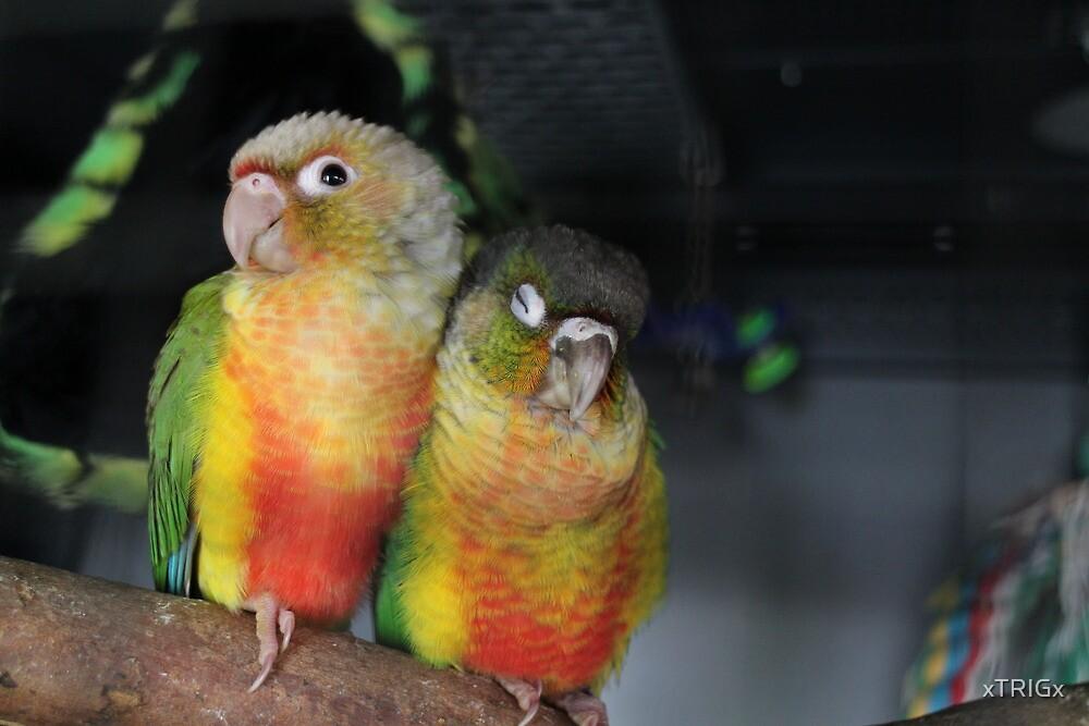 Elvis & Priscilla by xTRIGx