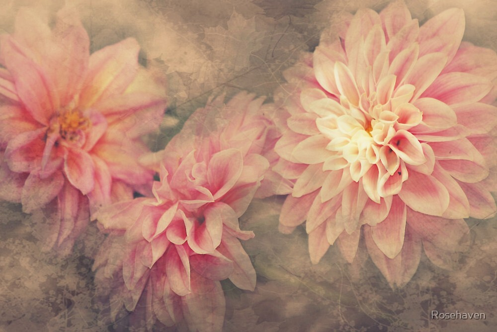 """Autumn Dahlia's"" by Rosehaven"
