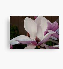 Magnolia Energy Canvas Print