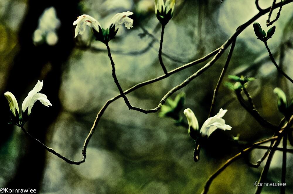 Happiness is...appreciate wild flowers... by Kornrawiee
