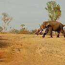 Elephant @ Work by Suresh Babu Subramanian