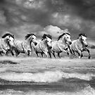 Galloping Grey Horses by Nicky Stewart