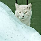 Cat in the snow by Greg  Walker