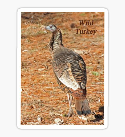 Wild Turkey Sticker