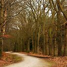 On the endless path towards spring by jchanders