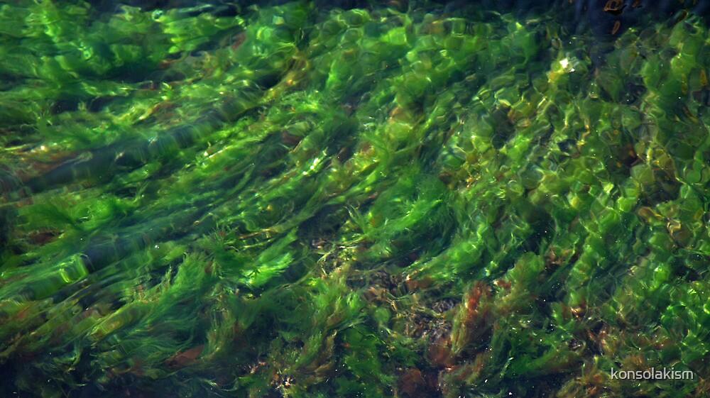 seaweed by konsolakism