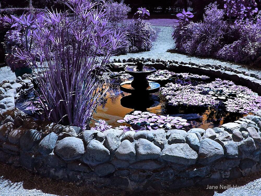 Lavender garden pool by Jane Neill-Hancock