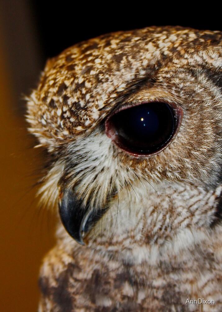 Small Owl : Beak by AnnDixon