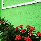 green wall by Lynne Prestebak