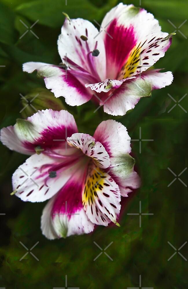 Spring Beauties by Heather Friedman