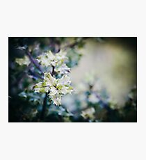 Holly Photographic Print