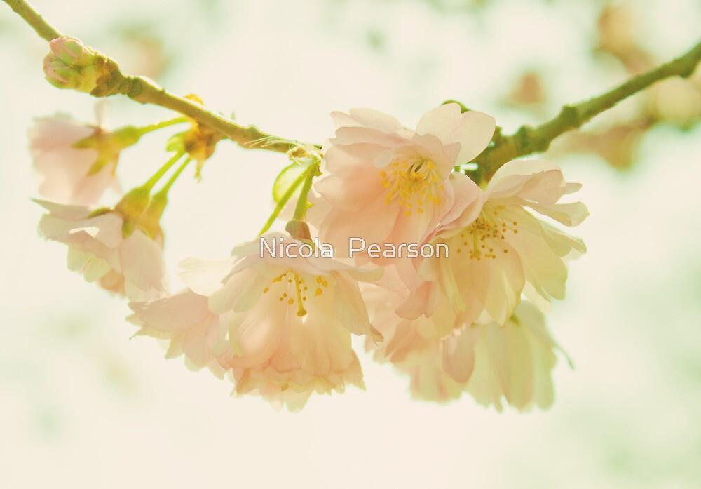 Spring has Sprung by Nicola  Pearson