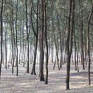 Trees Aplenty by BlackhawkRogue