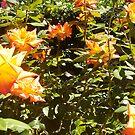 Orange Roses - 21 03 13 by Robert Phillips