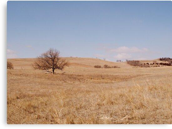 Lonely Tree on the Prairie by Scott Hendricks