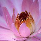 Pink Beauty by Louise Linossi Telfer