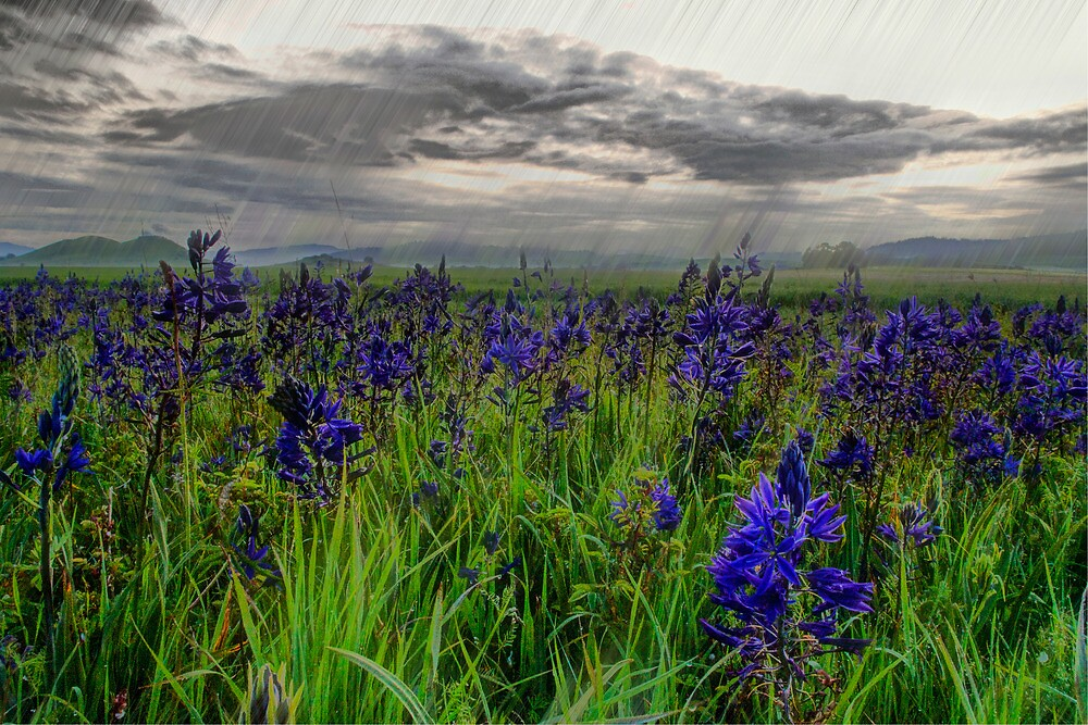 Even When It Rains by Charles & Patricia   Harkins ~ Picture Oregon