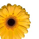Yellow Gerbera iCase by Ra12