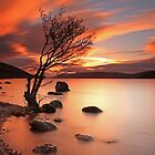 Lone Tree at Sunset. by highlandscot