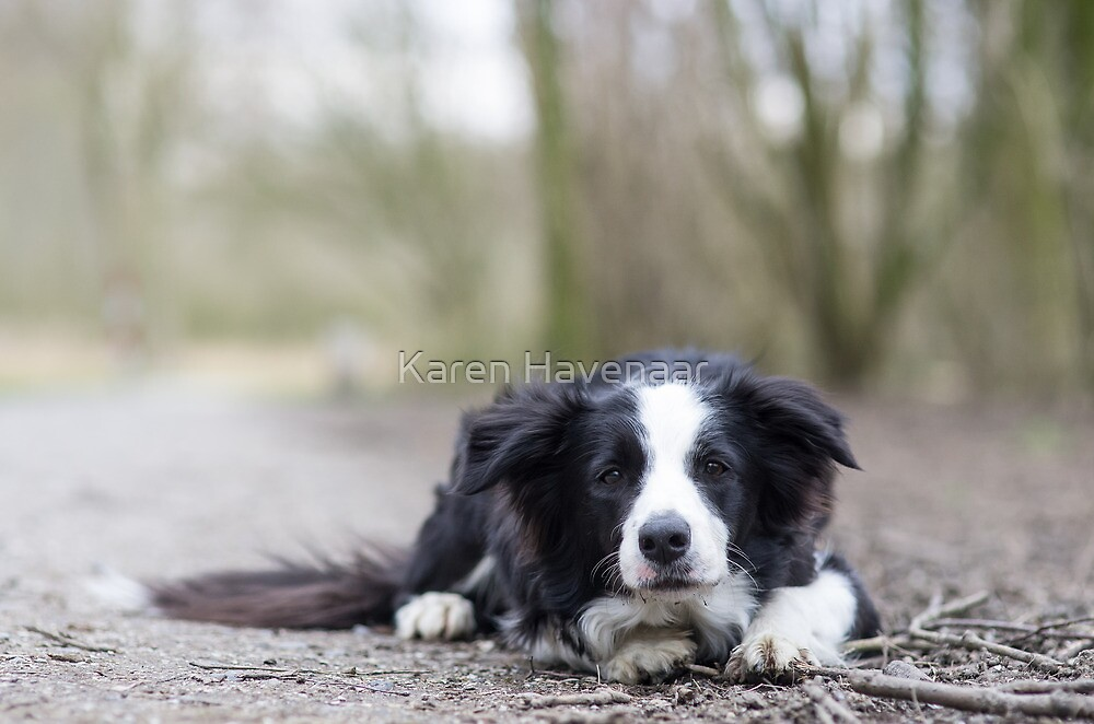 Patiently waiting by Karen Havenaar