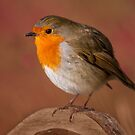 Red Robin by Patricia Jacobs DPAGB BPE4