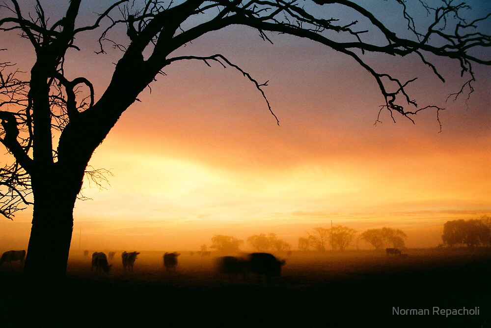 Cows grazing in the morning mist - Tongala - Victoria, Australia by Norman Repacholi