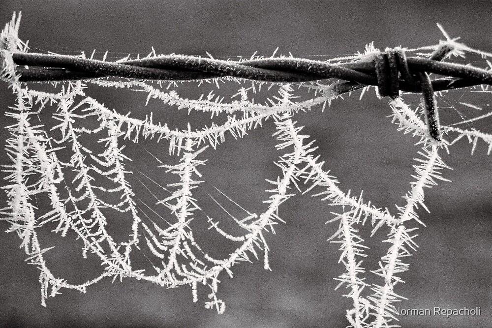 Frozen Spikes - Tongala - Victoria - Australia by Norman Repacholi
