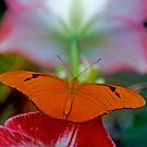 The Butterfly & The Hibiscus by gharris