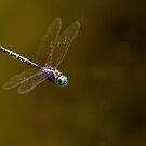 Dragonfly hovering  by ThisMoment