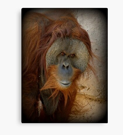 Sumatran Orangutan~ My name is Ibu Canvas Print