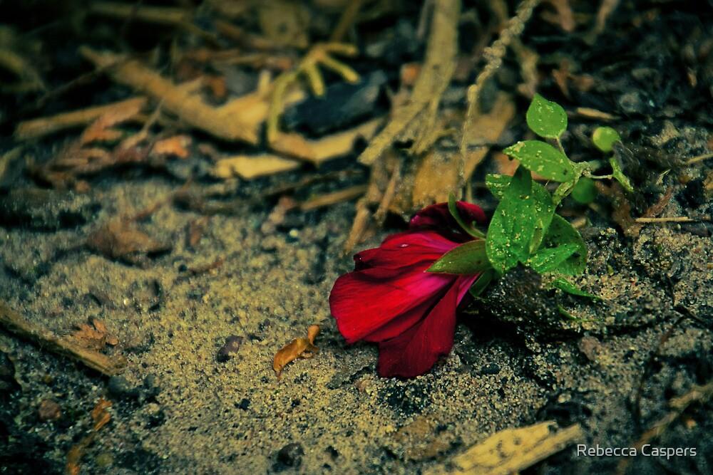 Single Red Flower by Rebecca Caspers