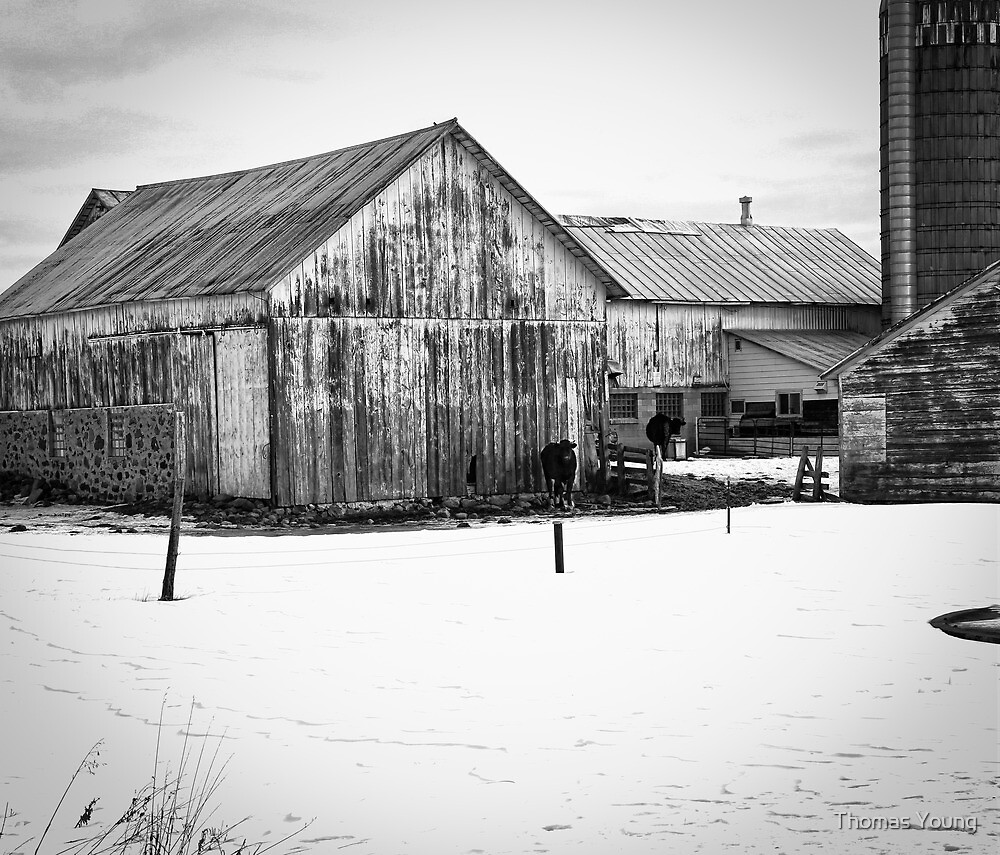 Wisconsin Winter Farm  by Thomas Young